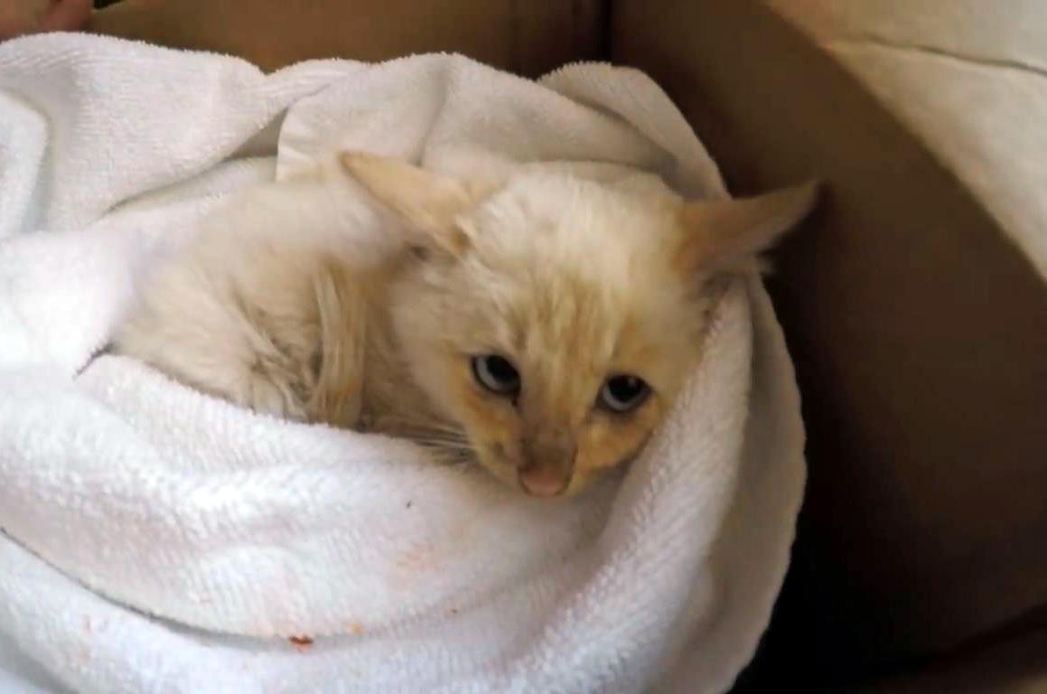 Истории о котиках, которых пришлось спасать из весьма странных мест