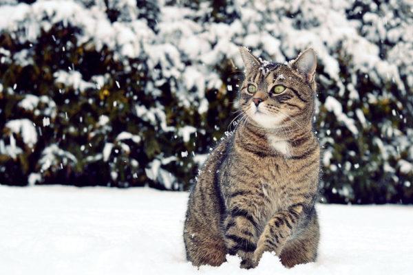 В Калининградской области бездомный кот всю ночь согревал пропавшего мальчика