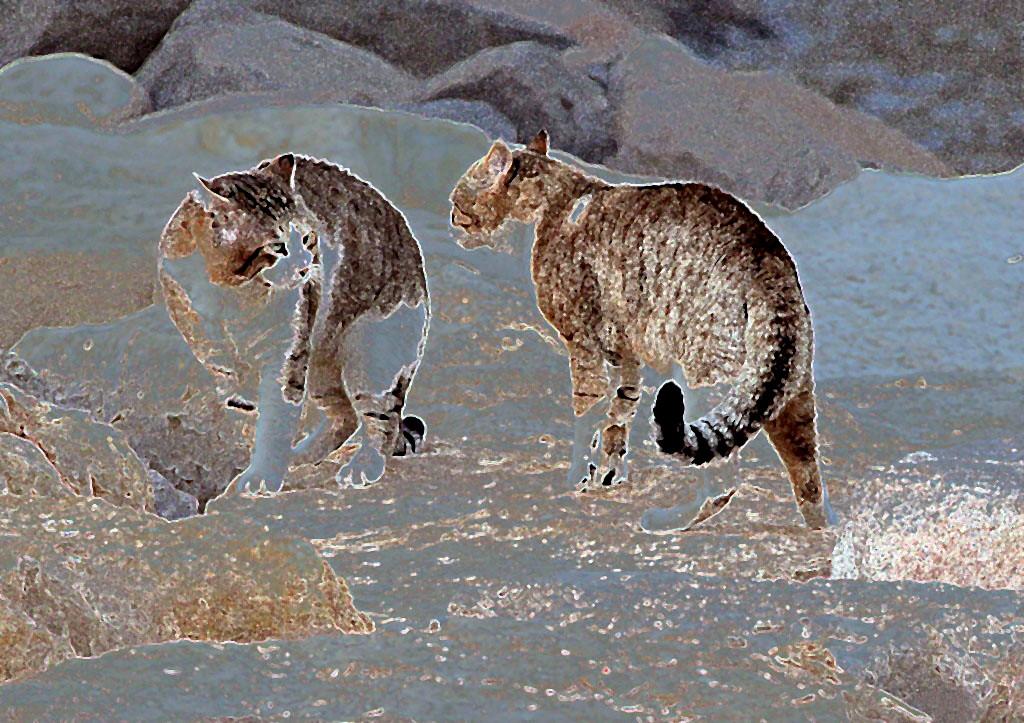 Кошачьи разборки