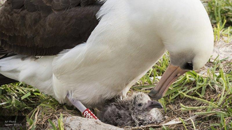 Палеонтологи в Новой Зеландии описали живших 3,5 миллиона лет назад альбатросов