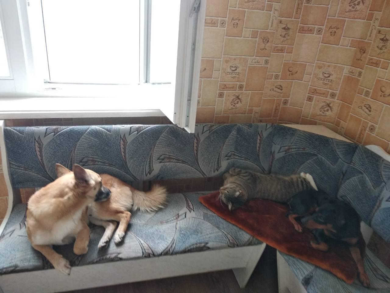 «Все лаяли, а он сидел тихо!» Грустный пёс из приюта взвыл от счастья, когда понял, что его ждёт