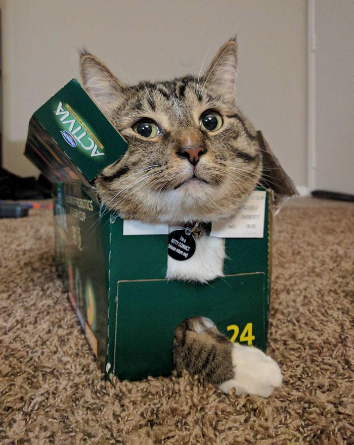 Я - кот, и мне так удобно!