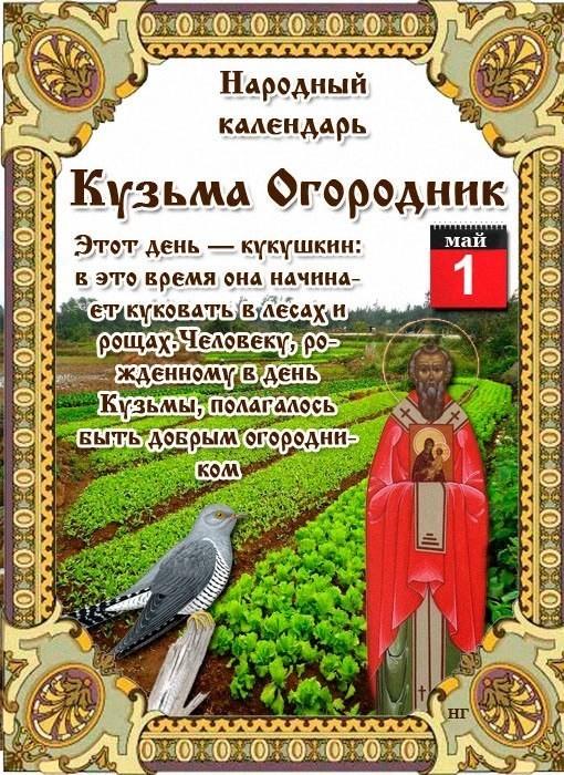 Кузьма Огородник Приметы  картинка