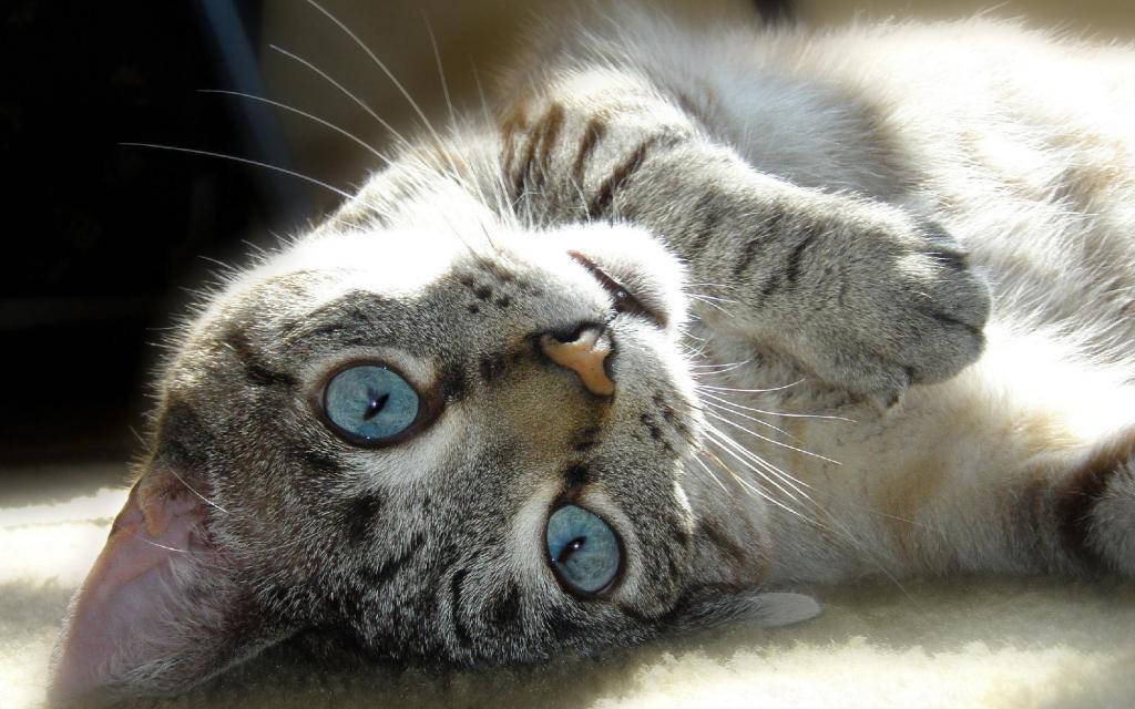 Как кот Васька хозяина на работу не пустил и спас ему жизнь