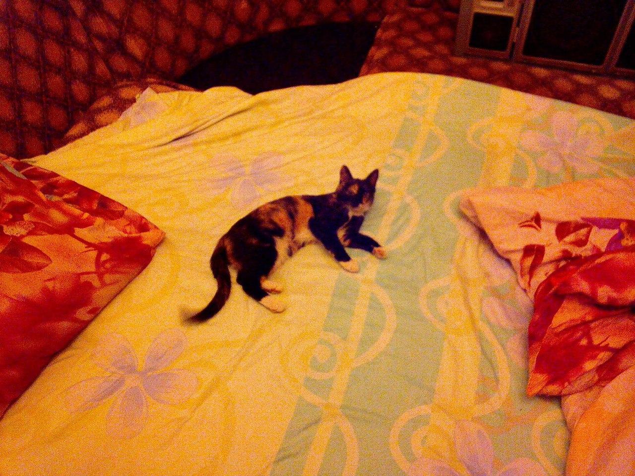Про найденышей и брошеных котиков