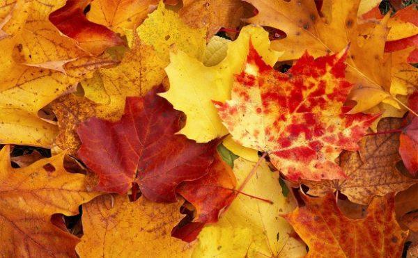 Лучшие идеи использования опавшей листвы в саду