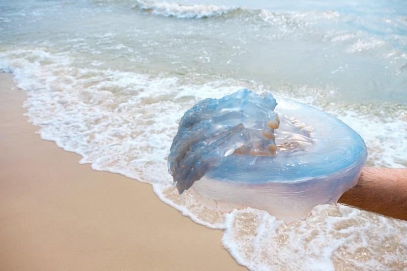 ожог от медузы чем лечить