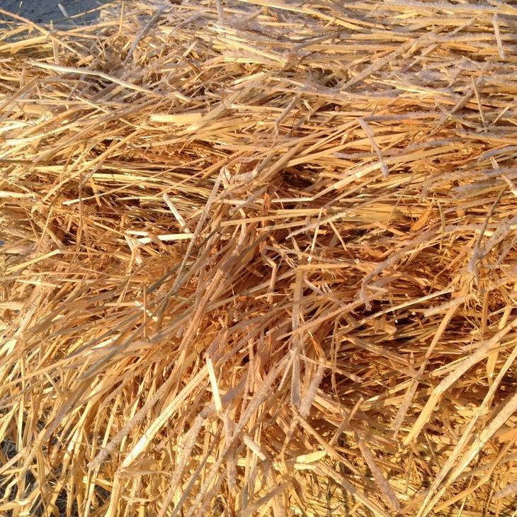 Эти 5 трав помогут восстановить гормональный баланс