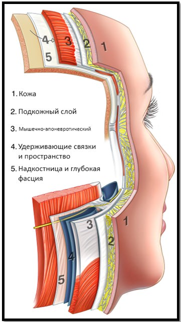 структура лица, слои