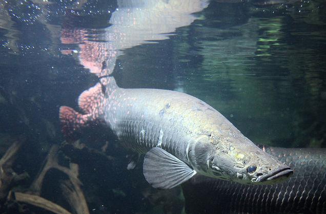 Биотехнологии. В Китае создали прочный материал, который напоминает чешую рыбы