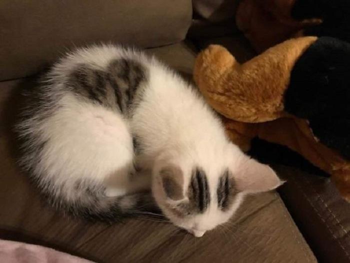 Вот такое пятнышко появляется у котенка, когда он сворачивается клубочком.