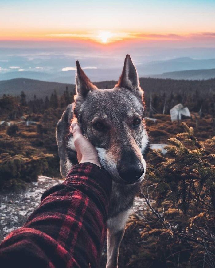 16. follow me, инстаграмм, собака, собака - друг человека, флешмоб, флешмобы. instagram, фото природы, фотограф