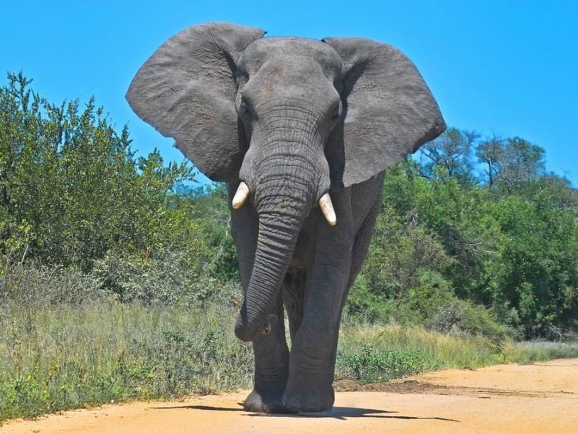 Слоны прогулялись по улицам …