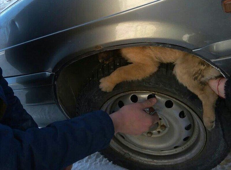 Бездомное животное пыталось …