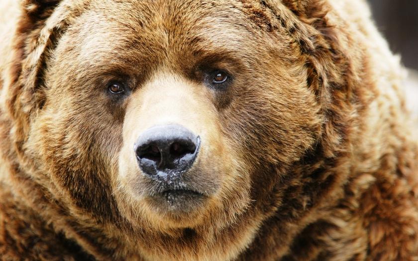 Россия ввела жестокие санкции в отношении США и Великобритании
