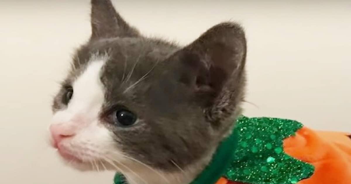 Котенок в костюме