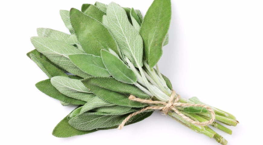 Какие пряные травы используют для приготовления блюд. Не только укроп и петрушку! вкусные новости,кулинария