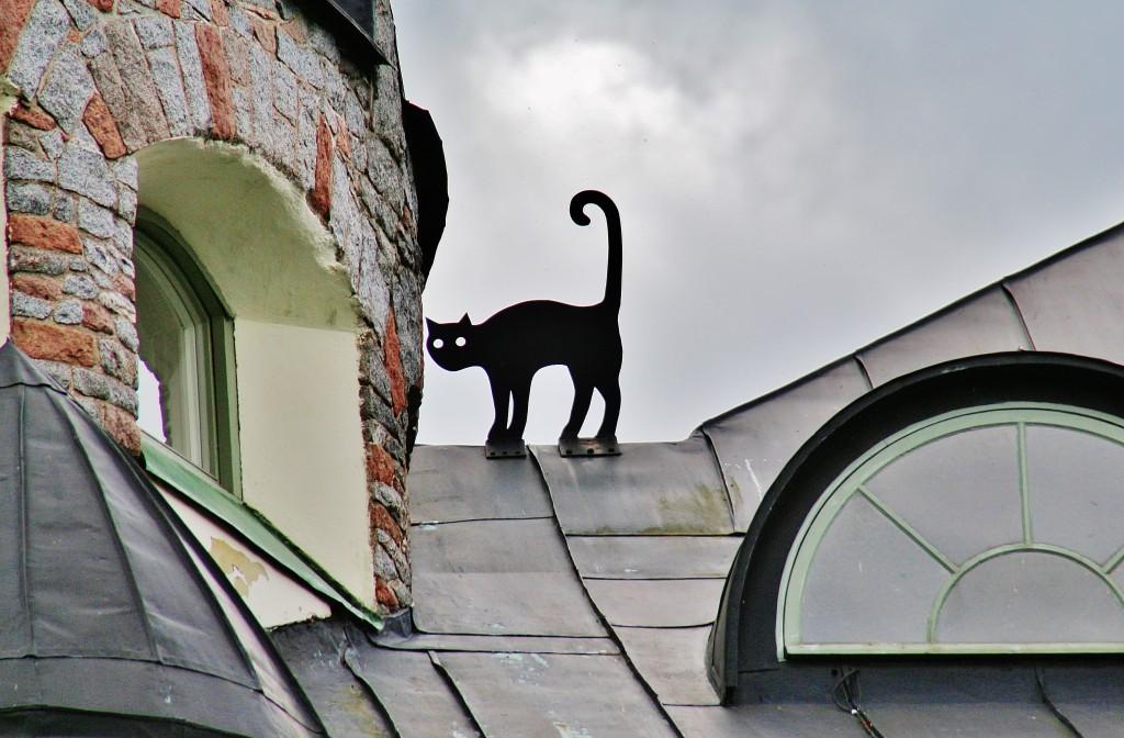 оно имело фото кота на крыше для осенне-зимнего