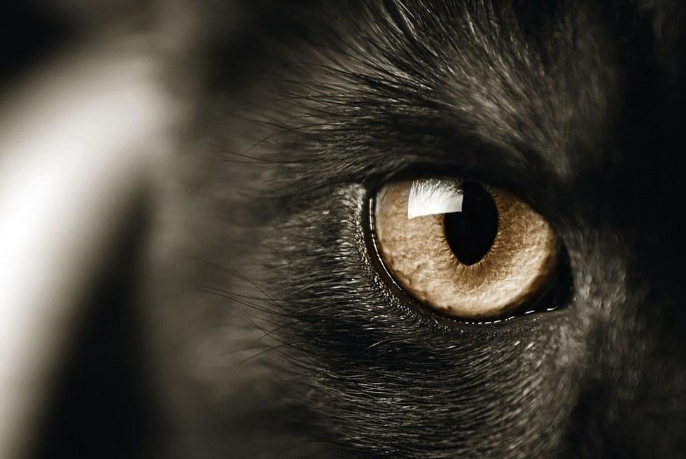 Коты реально защищают дом от…