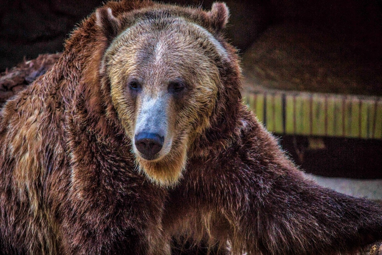 фотографии животных северной америки природе оттрахал жопу
