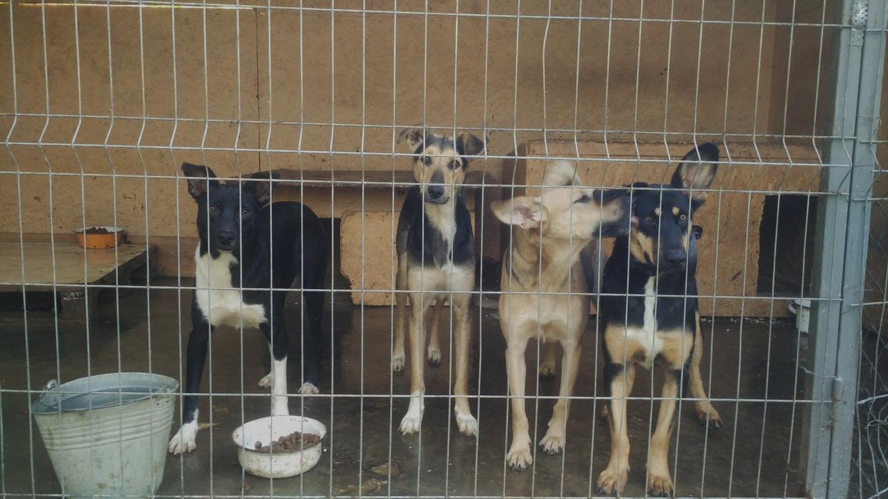 приют для бездомных животных в краснообске фото