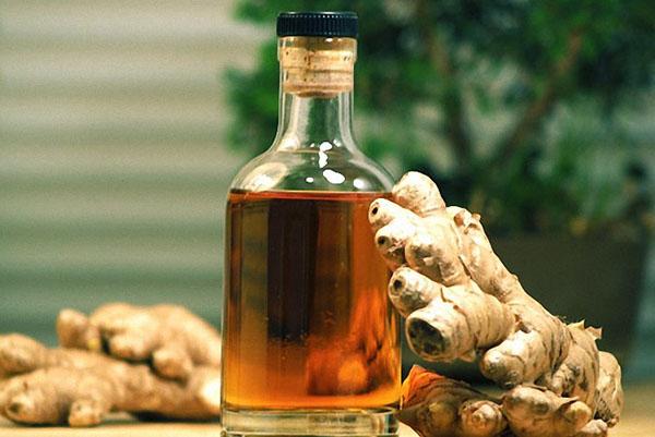 Польза имбирной настойки на водке