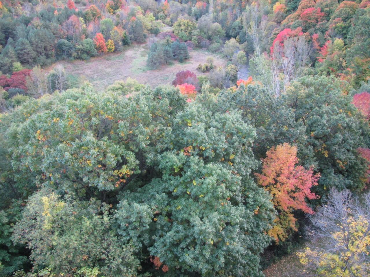 Парк Канадская Осень