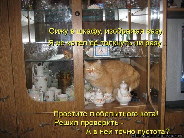 Самые смешные котоматрицы дл…