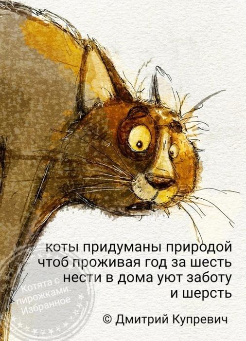 О котах...