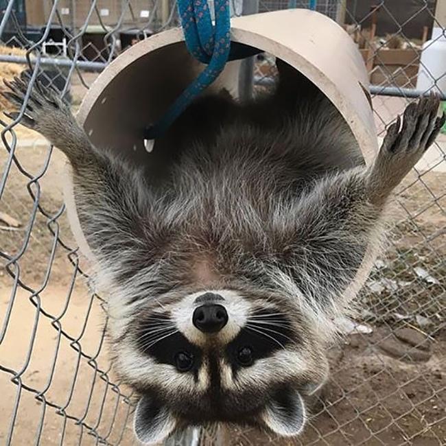 Волонтерам в приютах для животных скучать не приходится, и вот 20 умилительных фотодоказательств