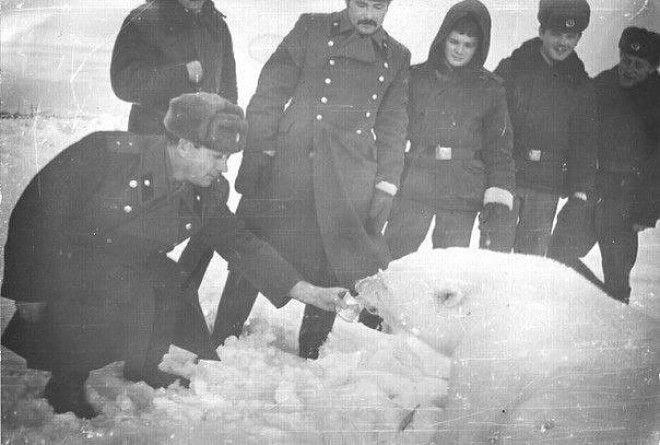 Пограничники Чукотского погранотряда кормят сгущенкой медведицу с медвежатами, СССР, 1980-е история, факты, фото