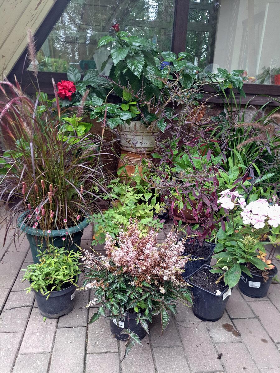 Как я подбираю сочетания растений для своего сада