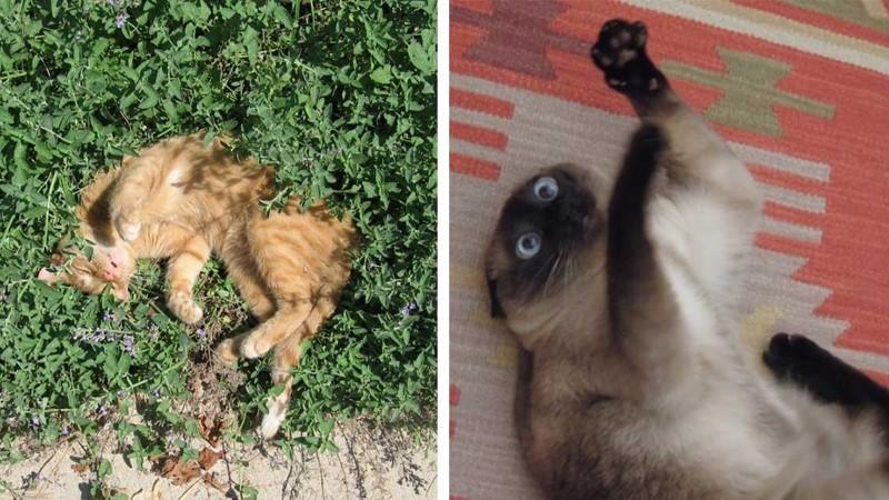 Обдолбанные кошки под кошачьей мятой, буквально потерявшие разум от её запаха