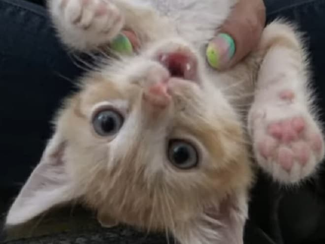 Под сухими ветвями лежали маленькие котята. В любой момент они могли выскочить на скоростную трассу истории из жизни