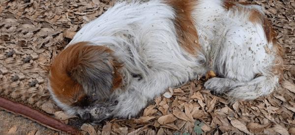 Собаку выбросили на ходу из машины, она страдала, а люди проезжали мимо