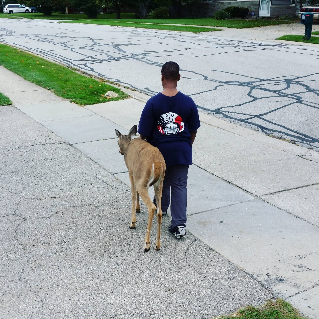 There is a blind deer in our neighborhood and this boy (10 yrs old) walks her from one grass patch to another every day before school to make sure she finds food.