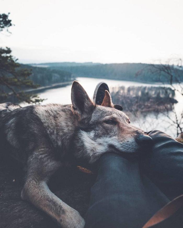 11. follow me, инстаграмм, собака, собака - друг человека, флешмоб, флешмобы. instagram, фото природы, фотограф