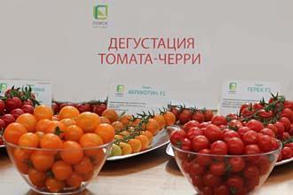 Черри - вишневые томаты!