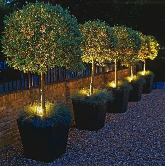Растения с подсветкой.