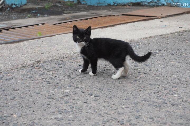 Коту удалось выжить в сильном пожаре