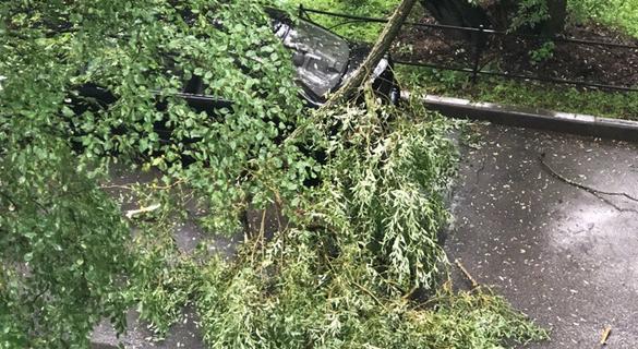 Радость или катастрофа: ливень и ветер в Петербурге сломали деревья и освежили горожан