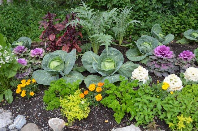 Овощи в цветнике
