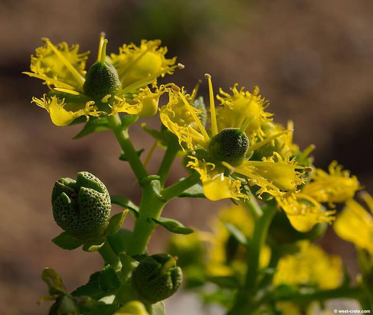 НЕРВНАЯ СИСТЕМА: простые настои трав при сложных заболеваниях
