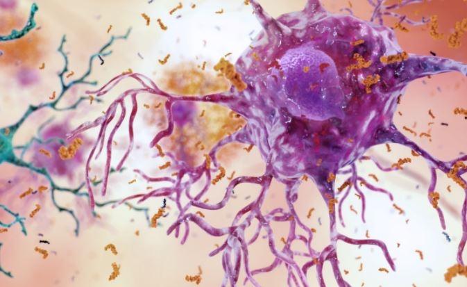 Учёные считают болезнь Альцг…
