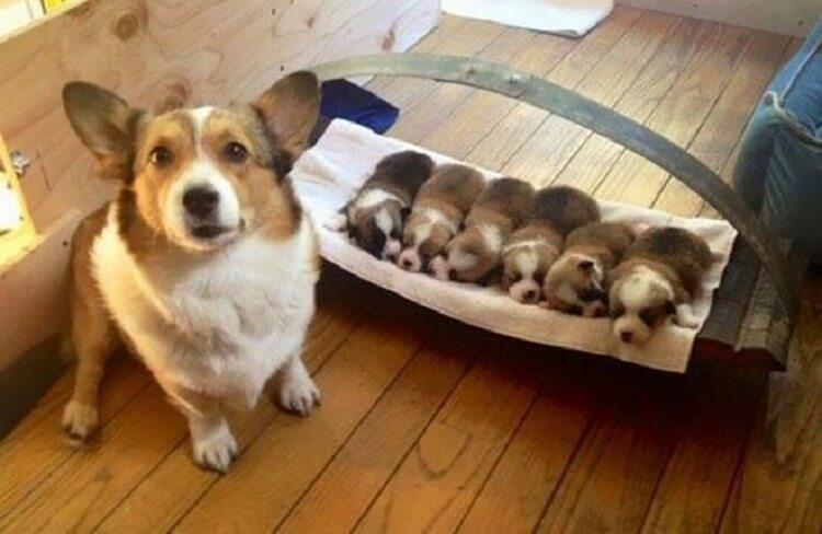 Представляем Вам 30 собак, которые очень гордятся своим потомством