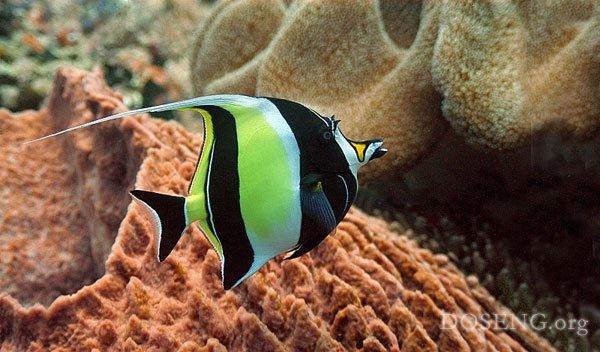 Загадочный подводный мир (21 фото)