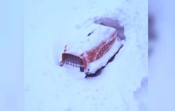 В сугробе на обочине дороги была красная коробка, почти целиком заваленная снегом... В ней теплилась жизнь!