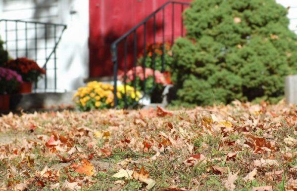 Сад вам этого не простит! Что не следует делать в саду осенью дача,полезные советы,сад и огород