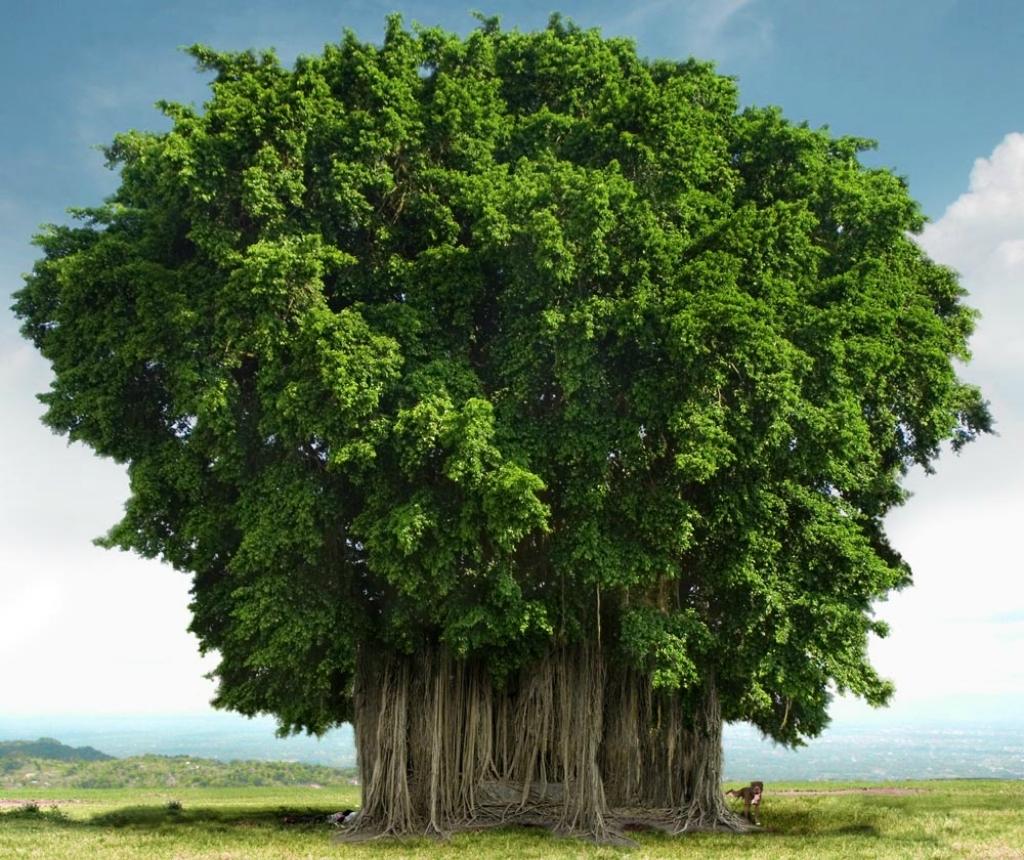 красивое дерево фото рисунок огромным котом