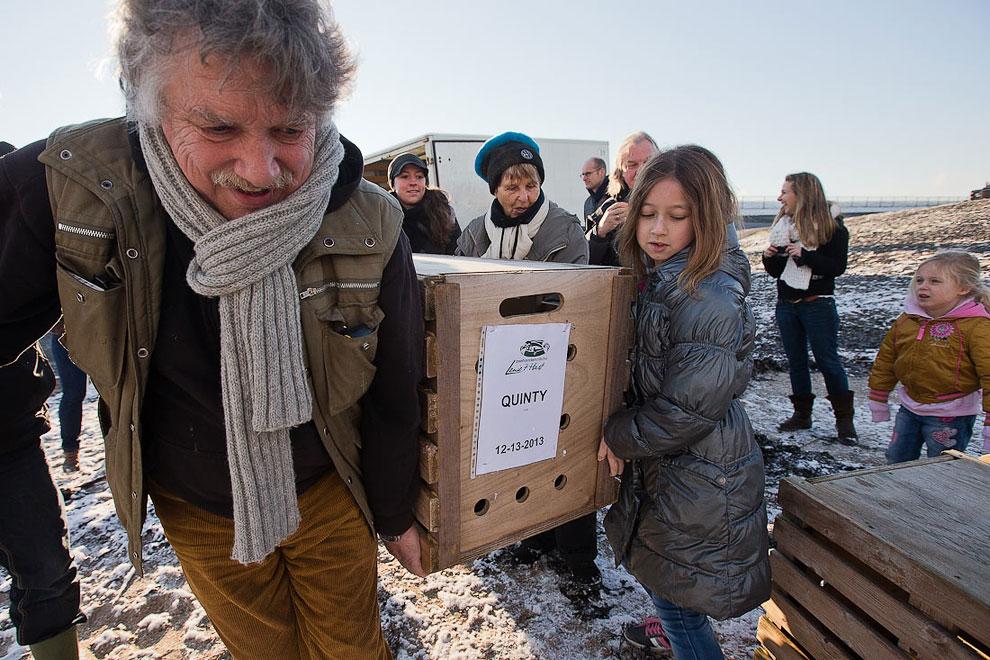 Тюлений приют в Нидерландах